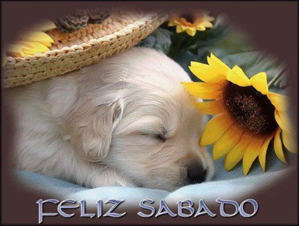 sabado_104